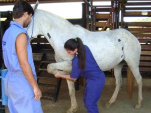 Imagem do post: Problemas de claudicação em equinos