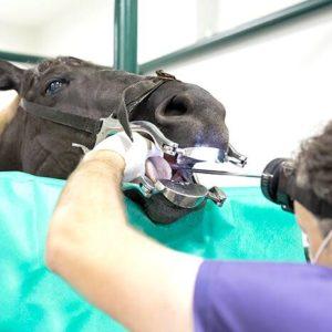 Imagem do post: Problemas dentários podem trazer muitos transtornos para a saúde do animal