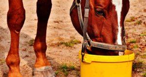 Imagem do post: Qual a melhor ração para cavalo? Veja o que precisa saber!