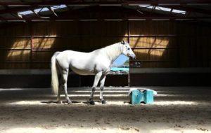 Imagem do post: Ração para cavalo: como fornecer de forma adequada