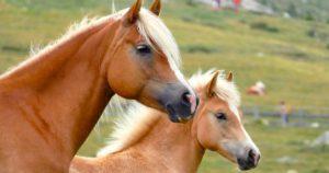 Imagem do post: Saiba como escolher a raça de cavalo ideal para você