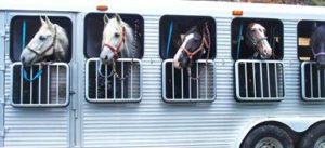 Imagem do post: Saiba quais os cuidados para transporte de cavalos