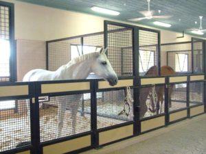 Imagem do post: Seu cavalo fica sempre em cocheiras?