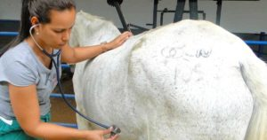 Imagem do post: Sinais vitais de equinos: quais são e como monitorar?