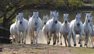 Imagem do post: Sistema de medição para o recorde da maior cavalgada do mundo é certificado