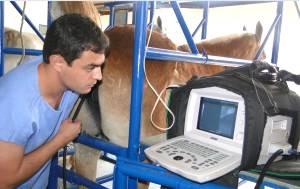 Imagem do post: Técnicas de reprodução equina requer atualização constante dos profissionais