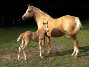 Imagem do post: Transferência de Embriões (TE) em equinos