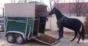 Imagem do post: Transporte de cavalos: saiba os cuidados necessários