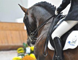 Imagem do post: Treinamento do cavalo atleta