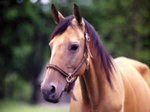Imagem do post: Tudo sobre cavalo: Saiba mais sobre a desidratação