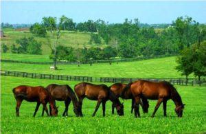 Imagem do post: Uso da Brachiaria na alimentação de equinos