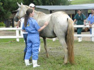 Imagem do post: Você já ouviu falar na Síndrome do Cavalo Roncador?