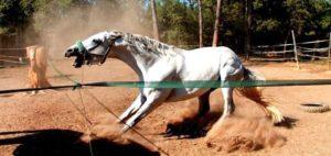 Imagem do post: Você sabe identificar os comportamentos estereotipados em cavalos?
