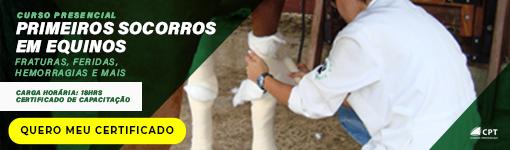 Saiba como aplicar injeção em cavalos