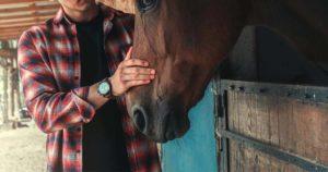 Imagem do post: Desgaste dentário em cavalos: por que identificar alterações?