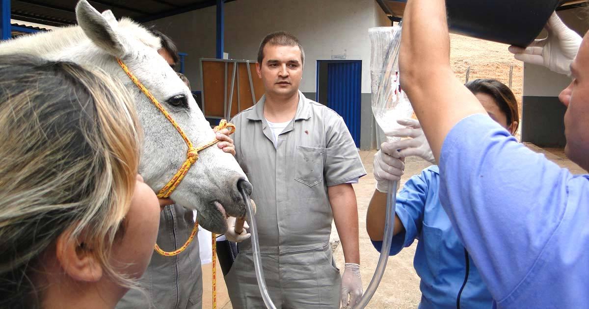 Imagem do post: Fluidoterapia em equinos: como e quando fazer?