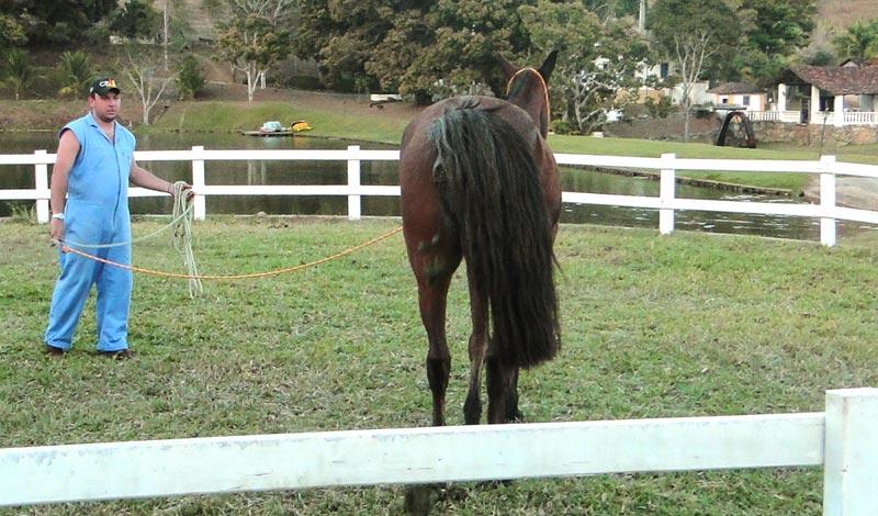 Imagem do post: Exame de claudicação em equinos: entenda a análise em movimento