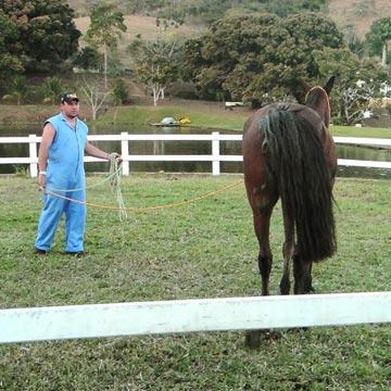 Exame de claudicação em equinos: entenda a análise em movimento