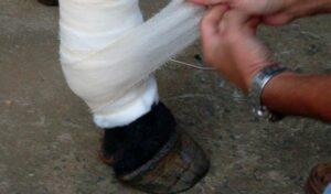 Imagem do post: Saiba quais são as causas e os tratamentos para o tétano em equinos