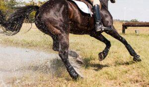 Imagem do post: Aparelho locomotor de cavalos: anatomia, fisiologia e importância dos cuidados