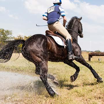 Aparelho locomotor de cavalos anatomia, fisiologia e importância dos cuidados