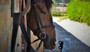 Imagem do post: Mercado de cavalos no Brasil: saiba porque investir