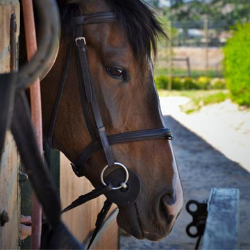 Mercado de cavalos no Brasil saiba porque investir
