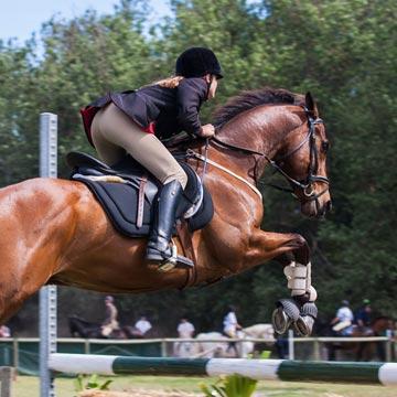 Nutrição de cavalos atletas entenda os principais pontos ligados à alimentação