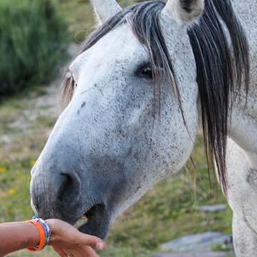 Conheça a anatomia e a fisiologia do sistema digestório de equinos