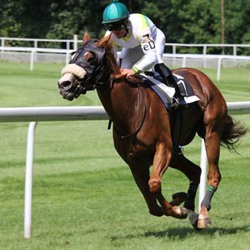 Hemorragia pulmonar induzida por exercício em equinos entenda mais