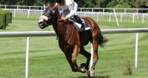 Imagem do post: Hemorragia pulmonar induzida por exercício em equinos: entenda mais