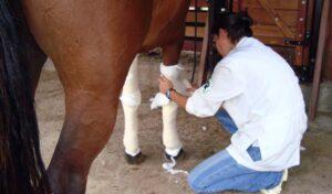 Imagem do post: Saiba como tratar as feridas em cavalos